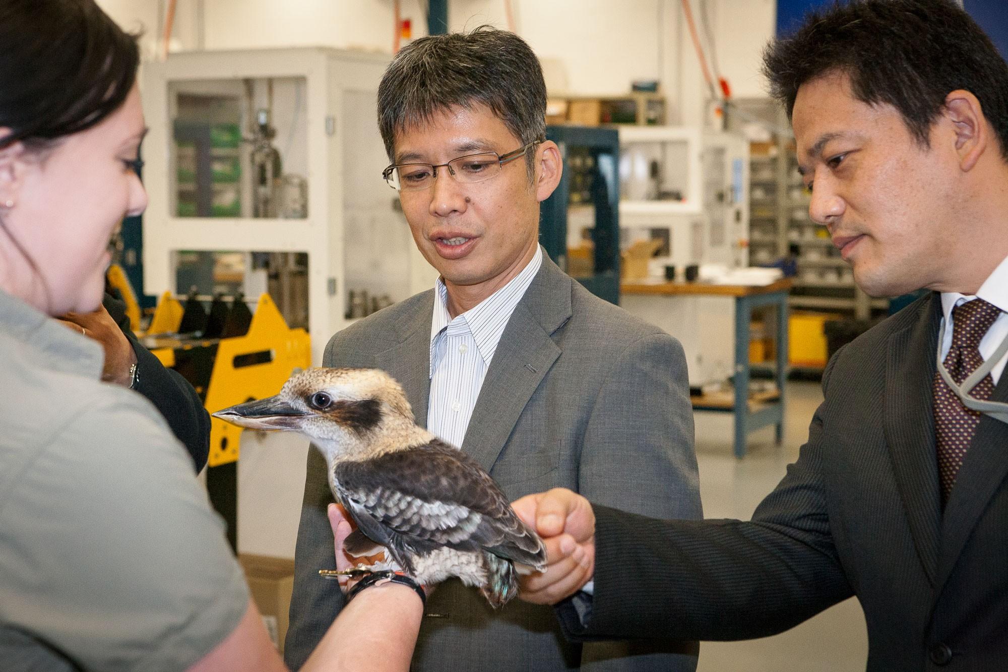 Laura introduces Mr Ida and Mr Ishida to an Australian kookaburra.